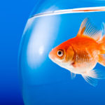5 Tips for Goldfish Maintenance for New Pet Owners