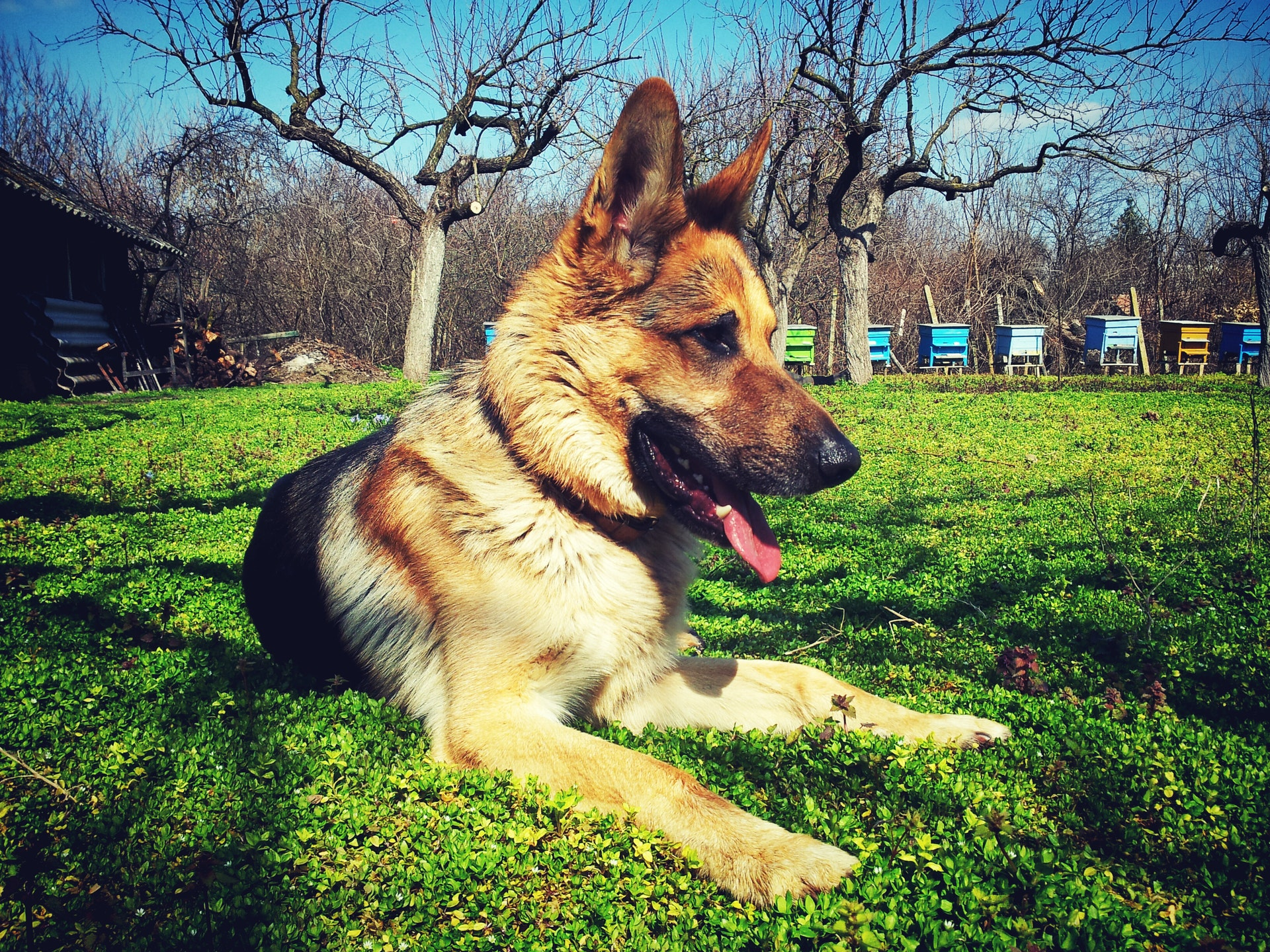 Top Dogs! 3 Best Dogs for Unbeatable Home Security and Protection