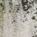 How do you stop mold growing on walls?