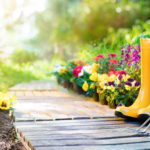 How to Save Plants from the Heat: 5 Easy Solutions