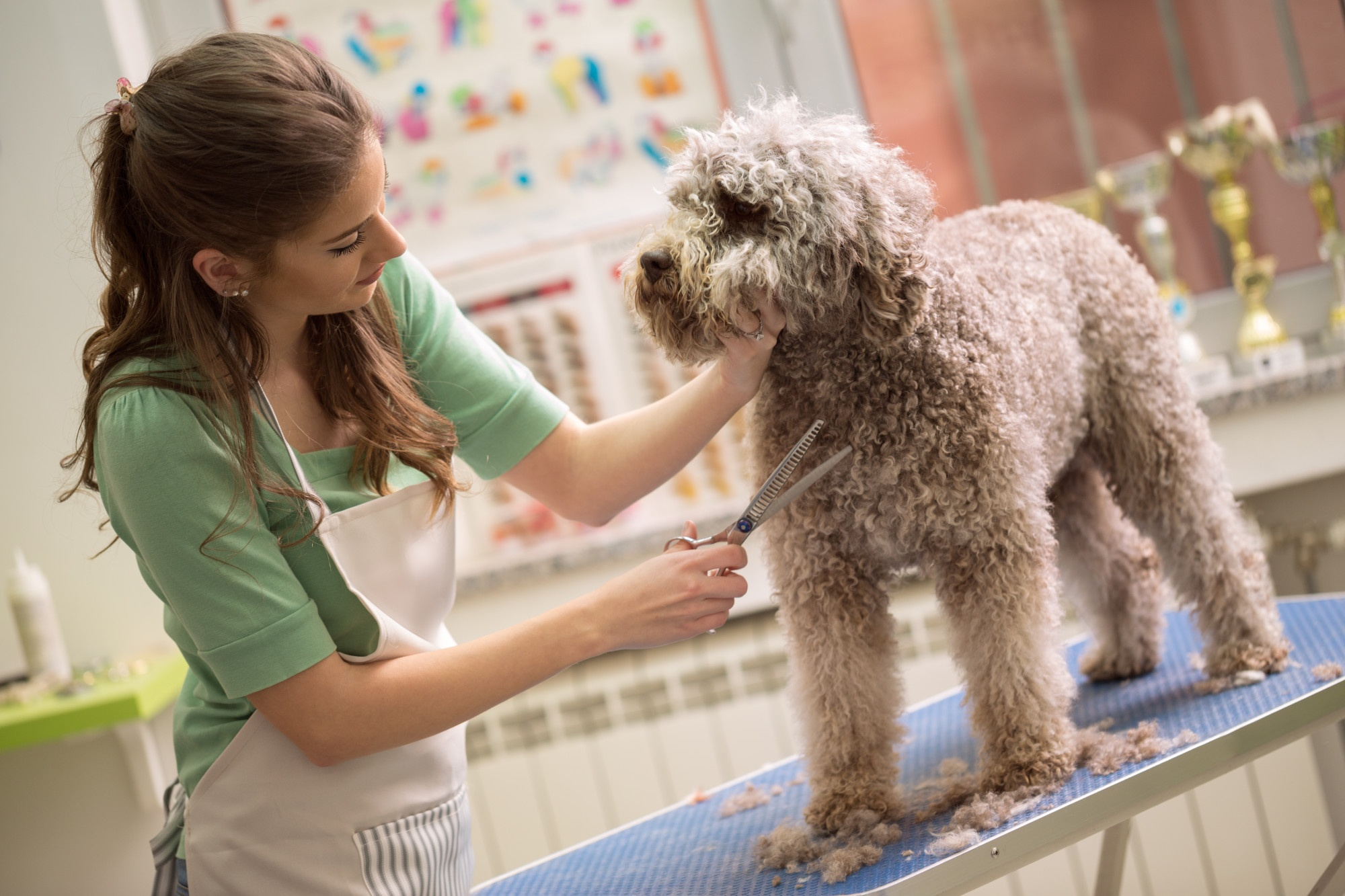 8 Reasons to Have Your Pets Professionally Groomed