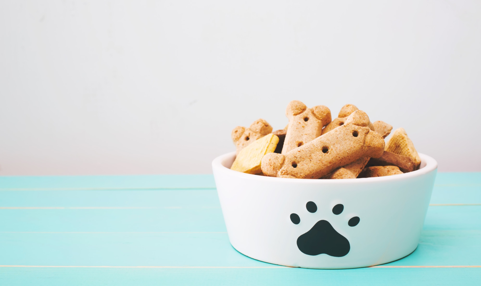 How Much Should I Feed My Dog? A Simple Guide