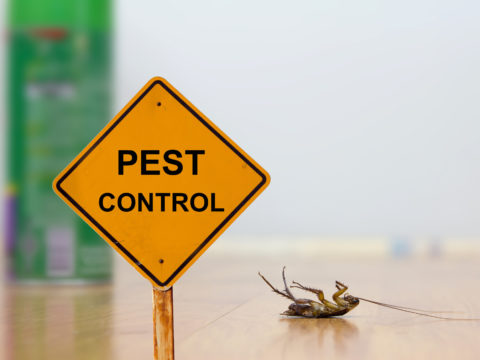 10 Effective Tips to Keep Bugs out of Your House for Good