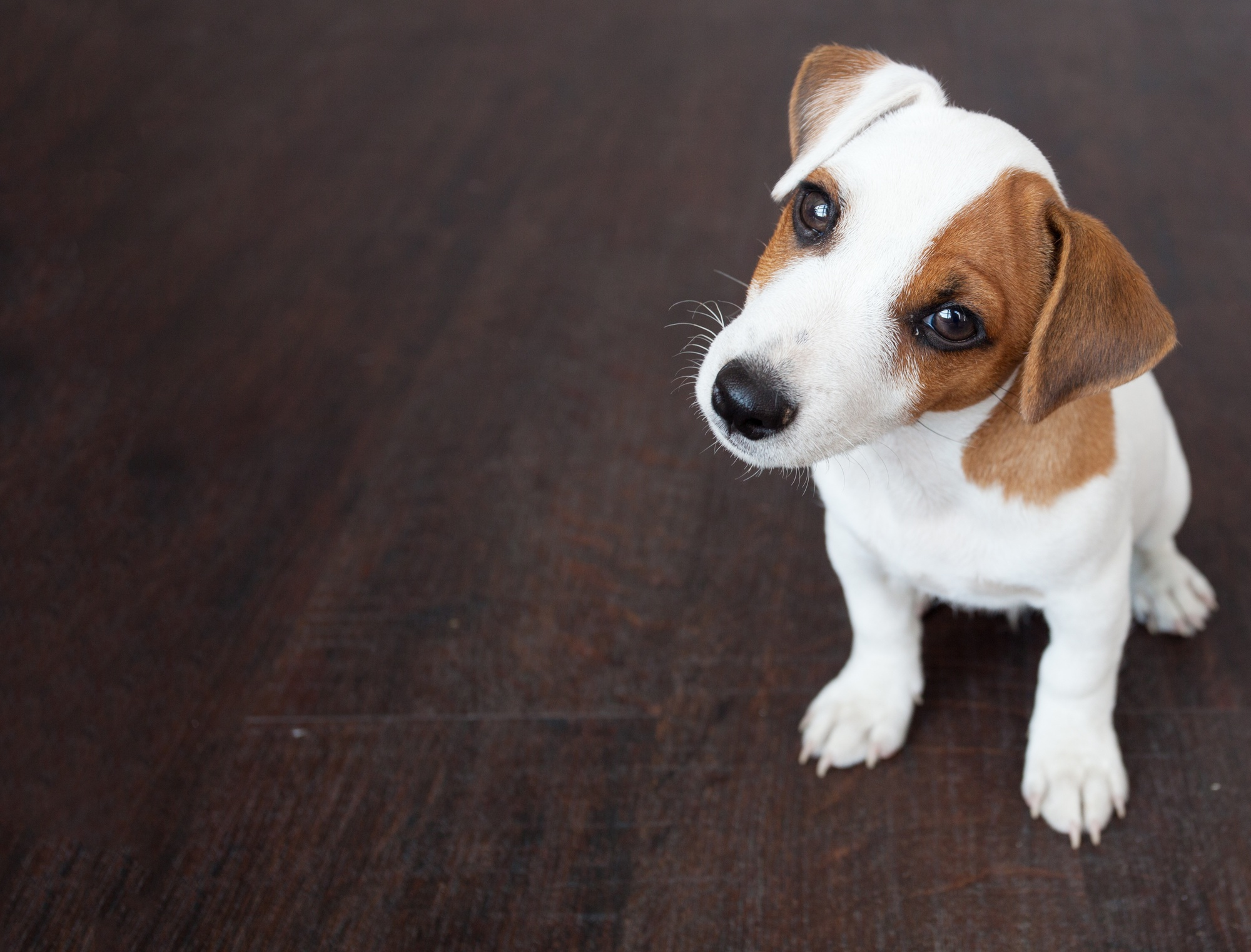First-Time Dog Parent: The New Dog Owner Guide for Beginners
