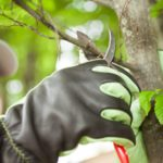 When Do You Prune Trees? (And Other Essential Tree Pruning Questions)