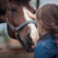 Colt Following: Is Buying a Horse Right for You?