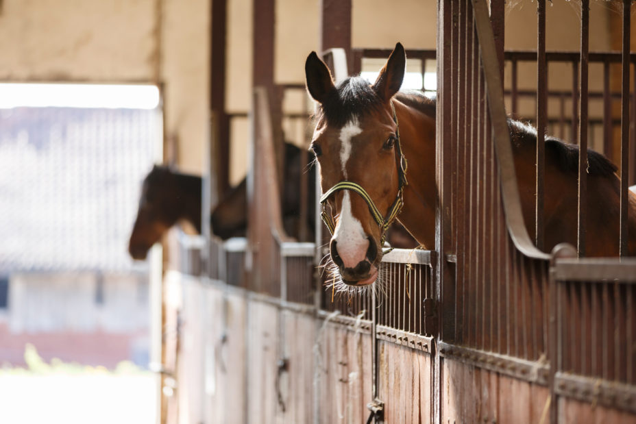 Designing a Horse Barn: How to Build a Horse Stall
