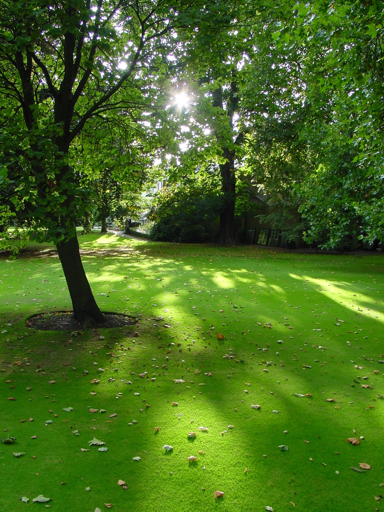 Benefits of Synthetic Turf over real grass