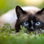 10 Cutest Cat Breeds to Consider for Your Forever Friend