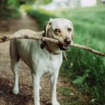 7 Tips for Starting an Exercise Routine for Dogs
