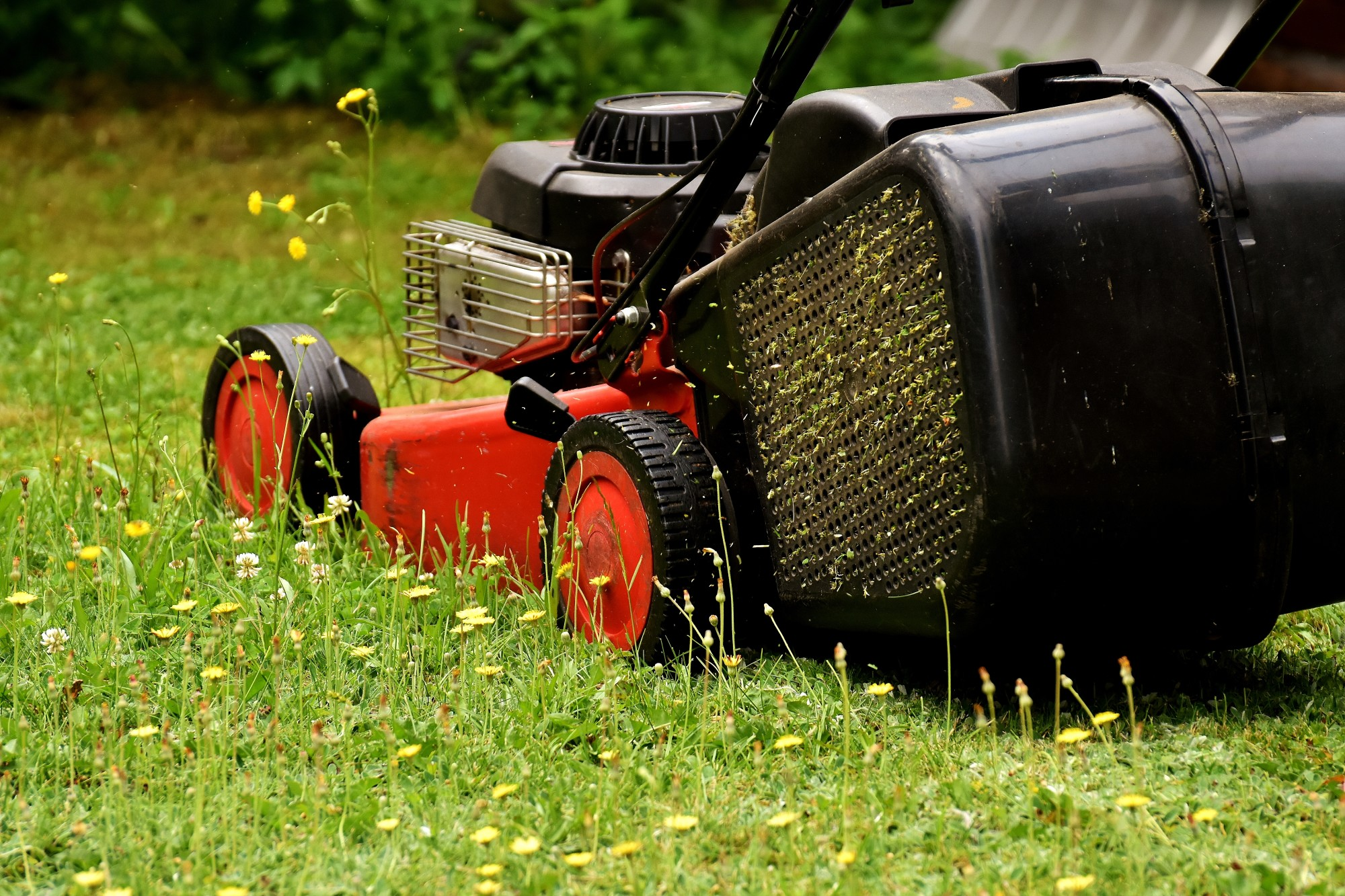 What Does It Cost to Have Your Lawn Mowed? The Average Prices