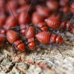 4 Ways Termites Can Damage Your Health and Home