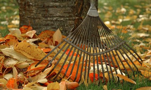 How to Get Rid of Leaves in Your Yard: A Simple Guide