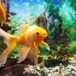 Top 3 Best Types of Tropical Fish for Your Fish Tank
