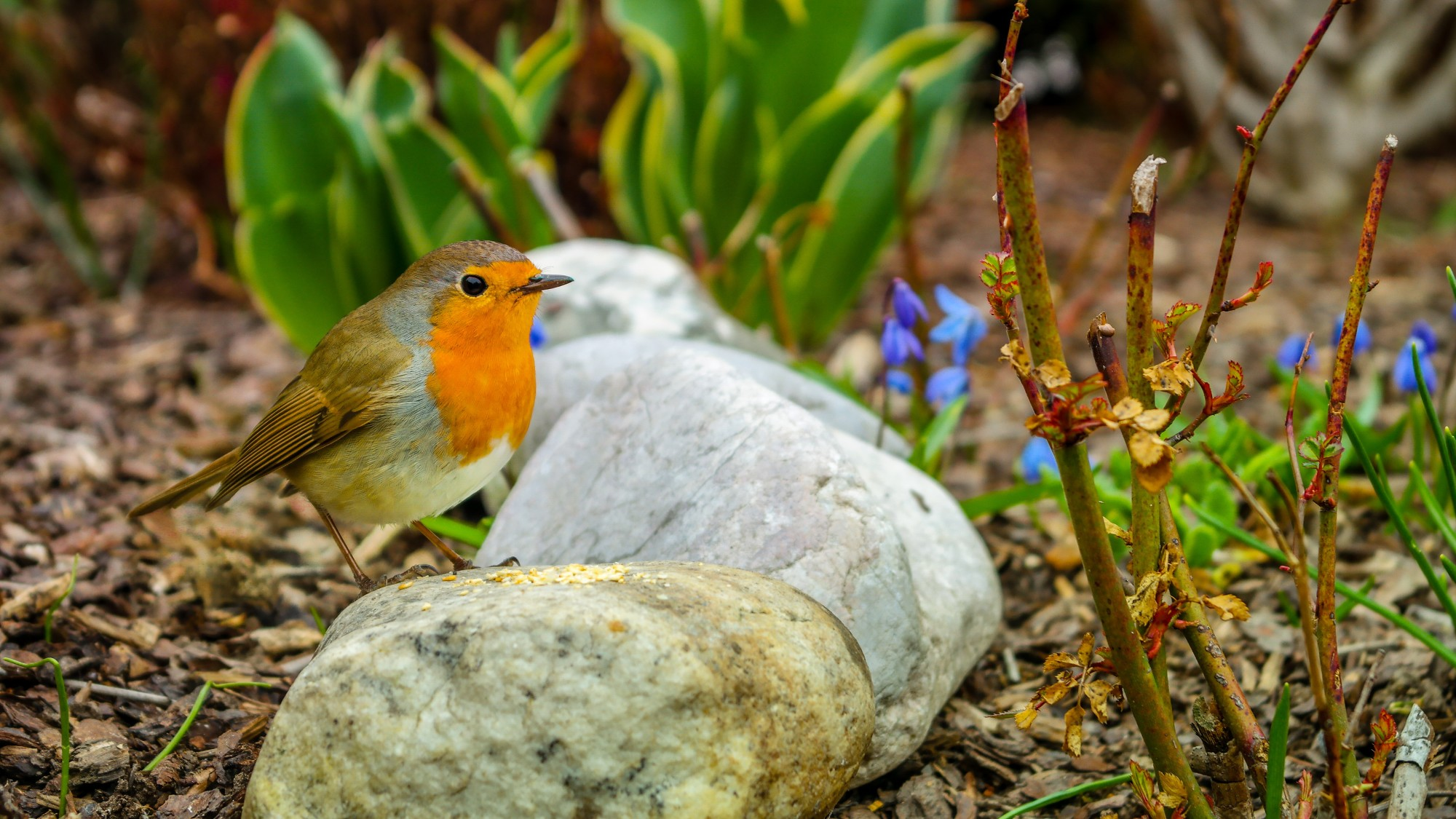 4 Tips on Protecting Gardens from Animals for New Homeowners