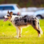 5 Terrific Reasons Why Dogs Are the Best Pets