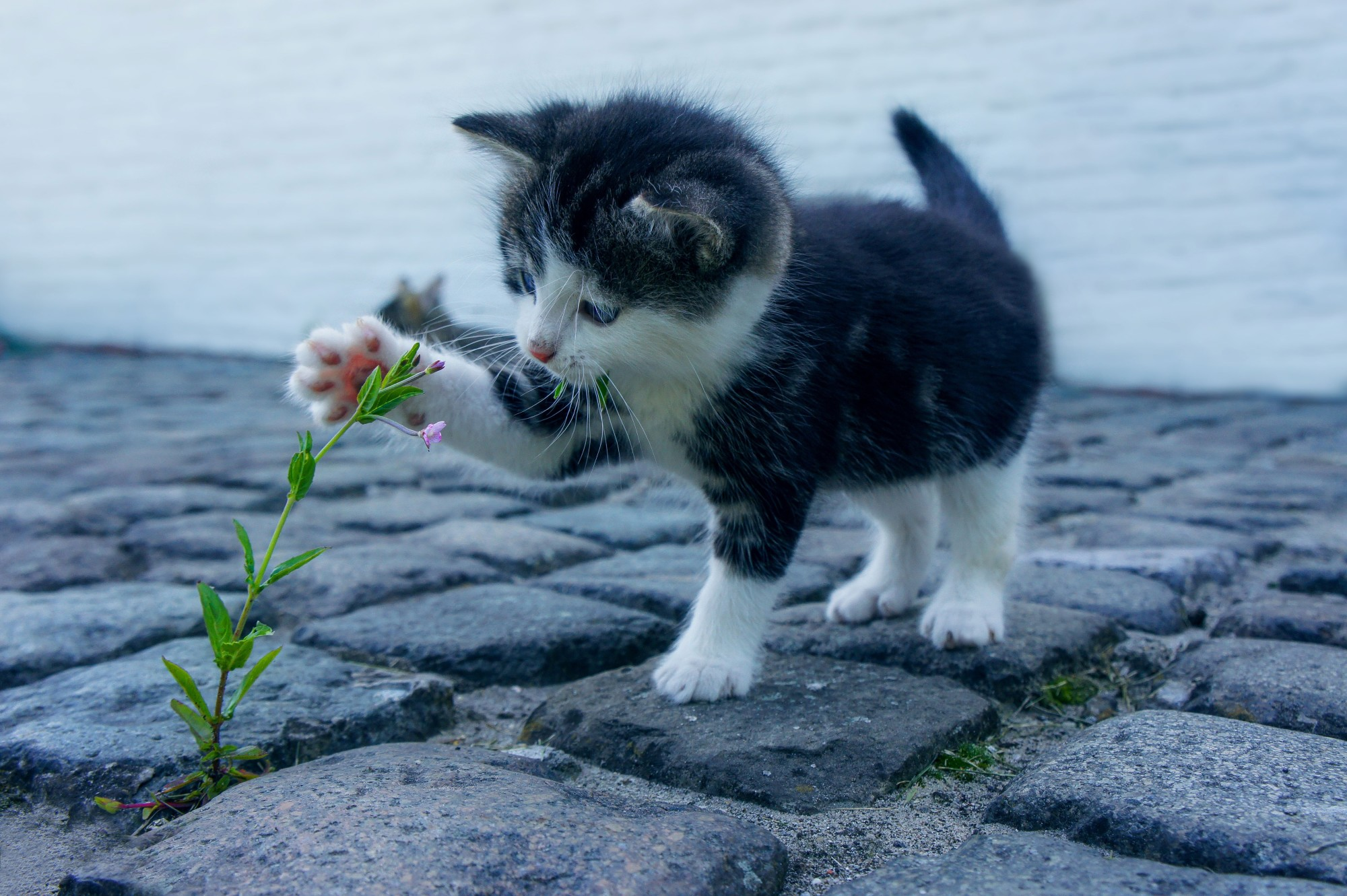 5 Things to Consider Before Adopting a Cat