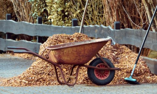 How to Mulch Around Trees: A Simple Guide