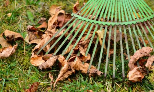The Ultimate Fall Gardening Checklist