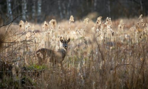 Health Benefits of Hunting: 10 Expert-Backed Benefits