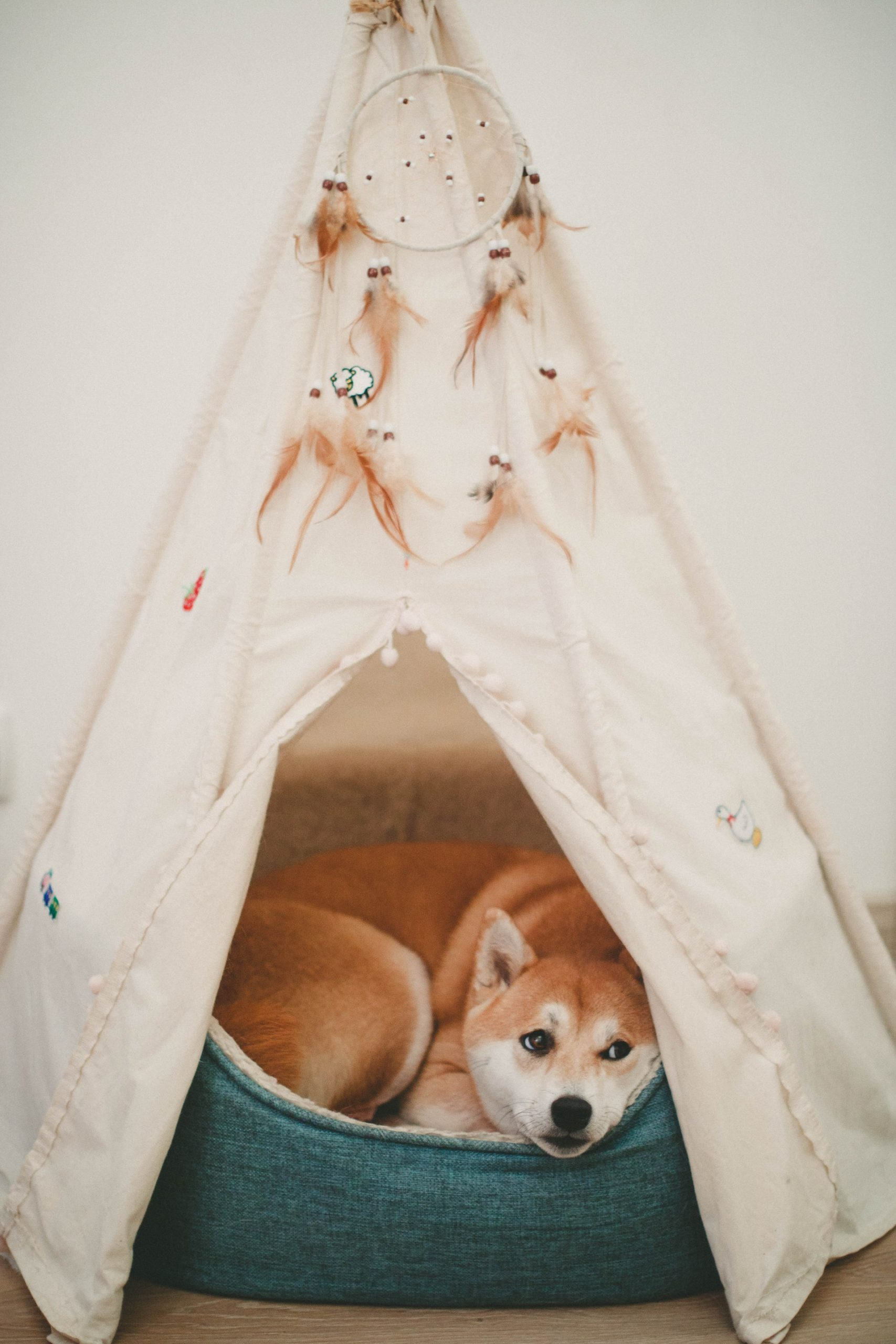 Does Your Dog Have A Sleep Disorder?