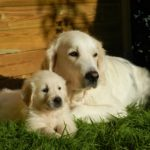 Pet Pals: 5 Gentle Dog Breeds for Your Family to Consider
