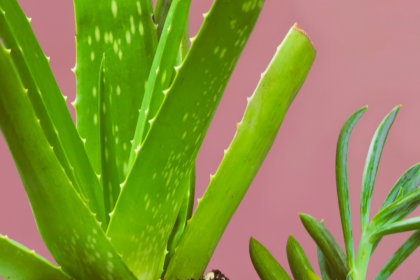 8 Indoor Plants that Can Help with Anxiety and Improve Sleep