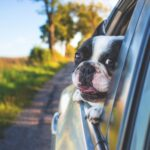 How to Road Trip With Your Dog and Have the Time of Your Life