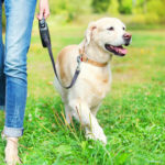 The New Dog Parent Checklist: Your Furry Friend Essentials