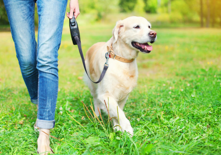The New Dog Parent Checklist: Your Furry Friend Essentials