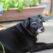 8 Ways to Keep a Senior Dog Happy and Healthy