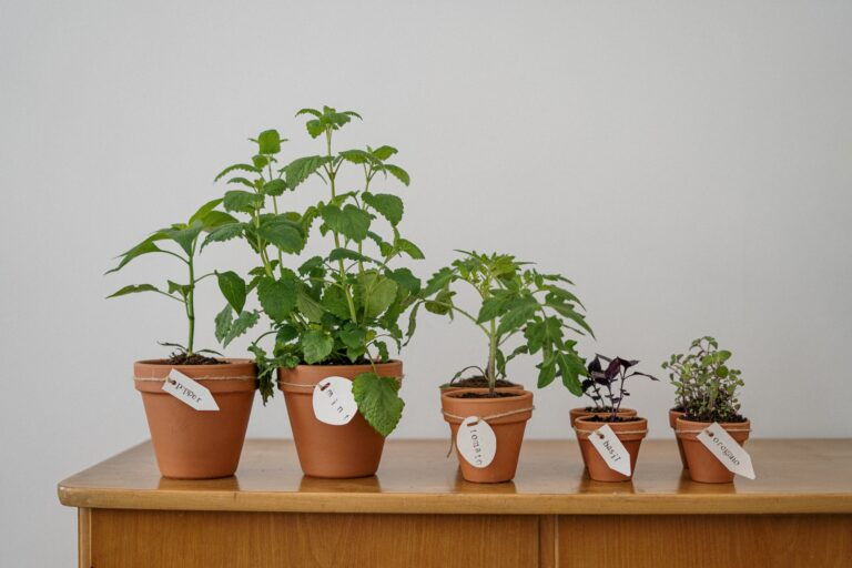 Plants You Can Grow in Apartment and Use Them in Cooking