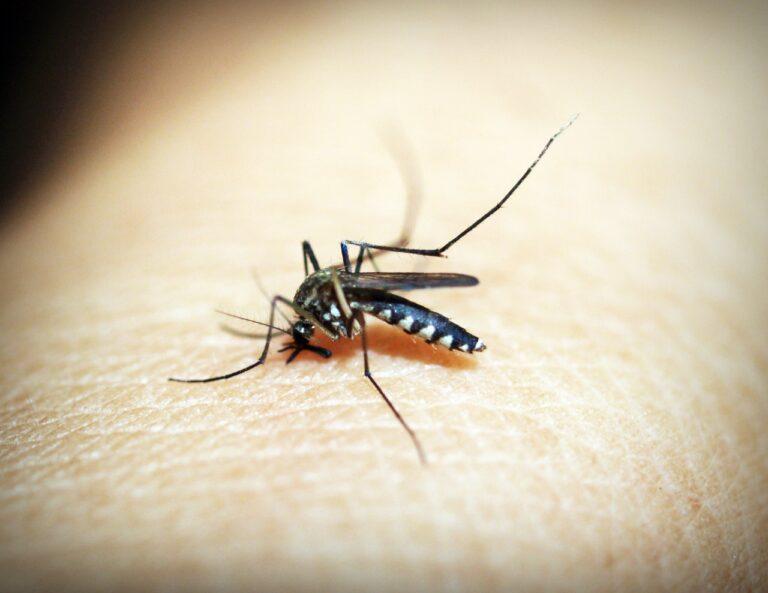 Pest Control During Covid-19 Crisis