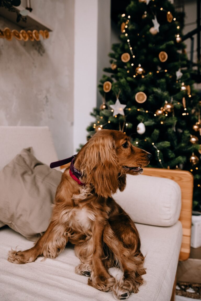Pet Holiday Stress- Keep The Spirits High With CBD