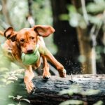 5 Ways to Exercise Your Pet During the Pandemic