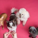 DIY Treats Recipes for Your Pets