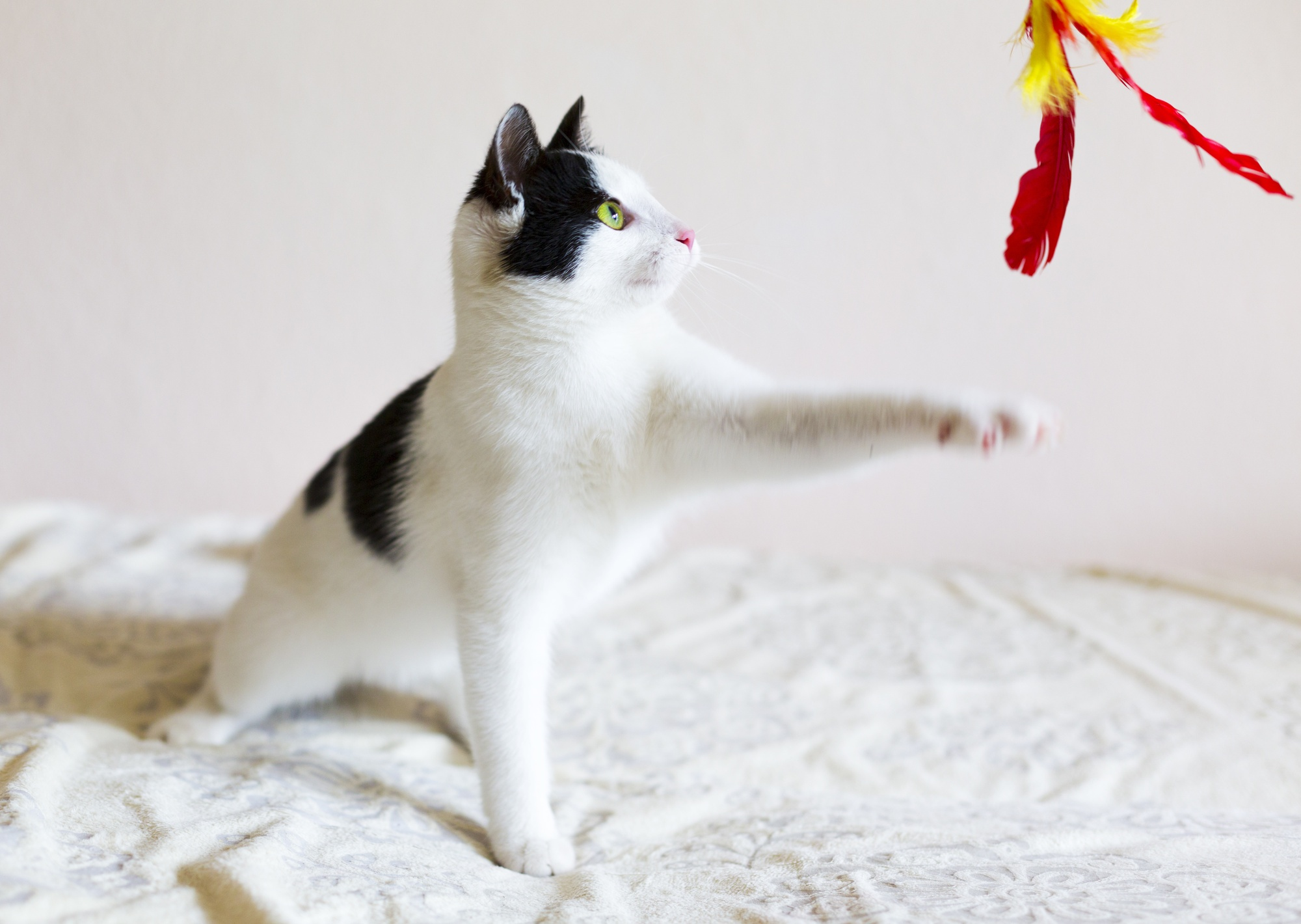 3 of the Best Toys for Active Cats (and How to Use Them)