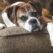 Vestibular Disease: A Complete Guide to Helping Your Older Dog Adjust