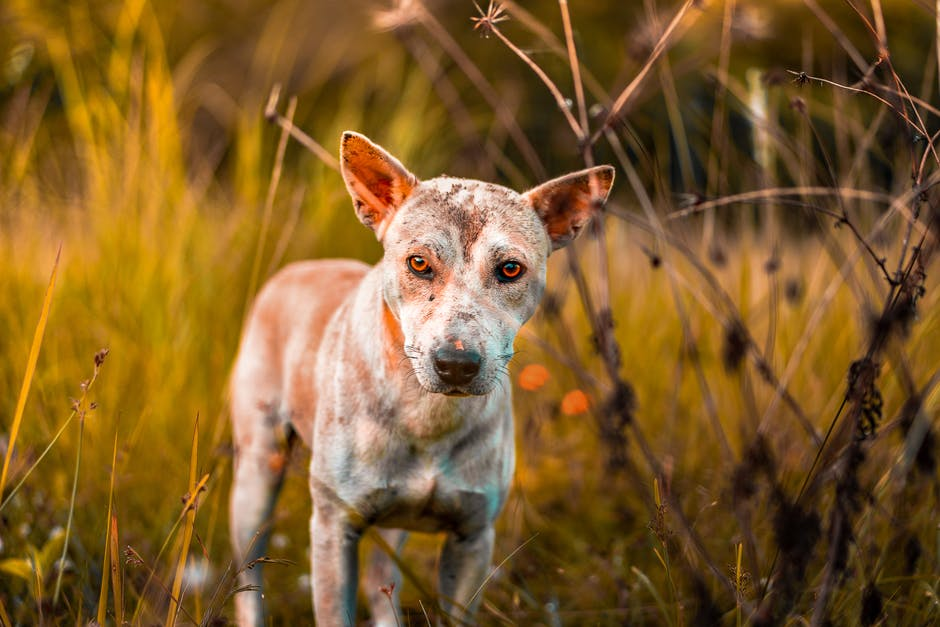 What Are the Signs of a Dog Skin Allergy? How to Sooth Your Pet's Itching