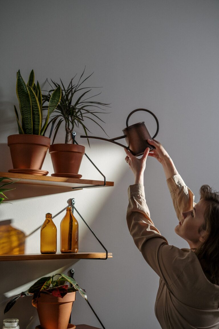 How To Decide When Your Houseplants Need Watering