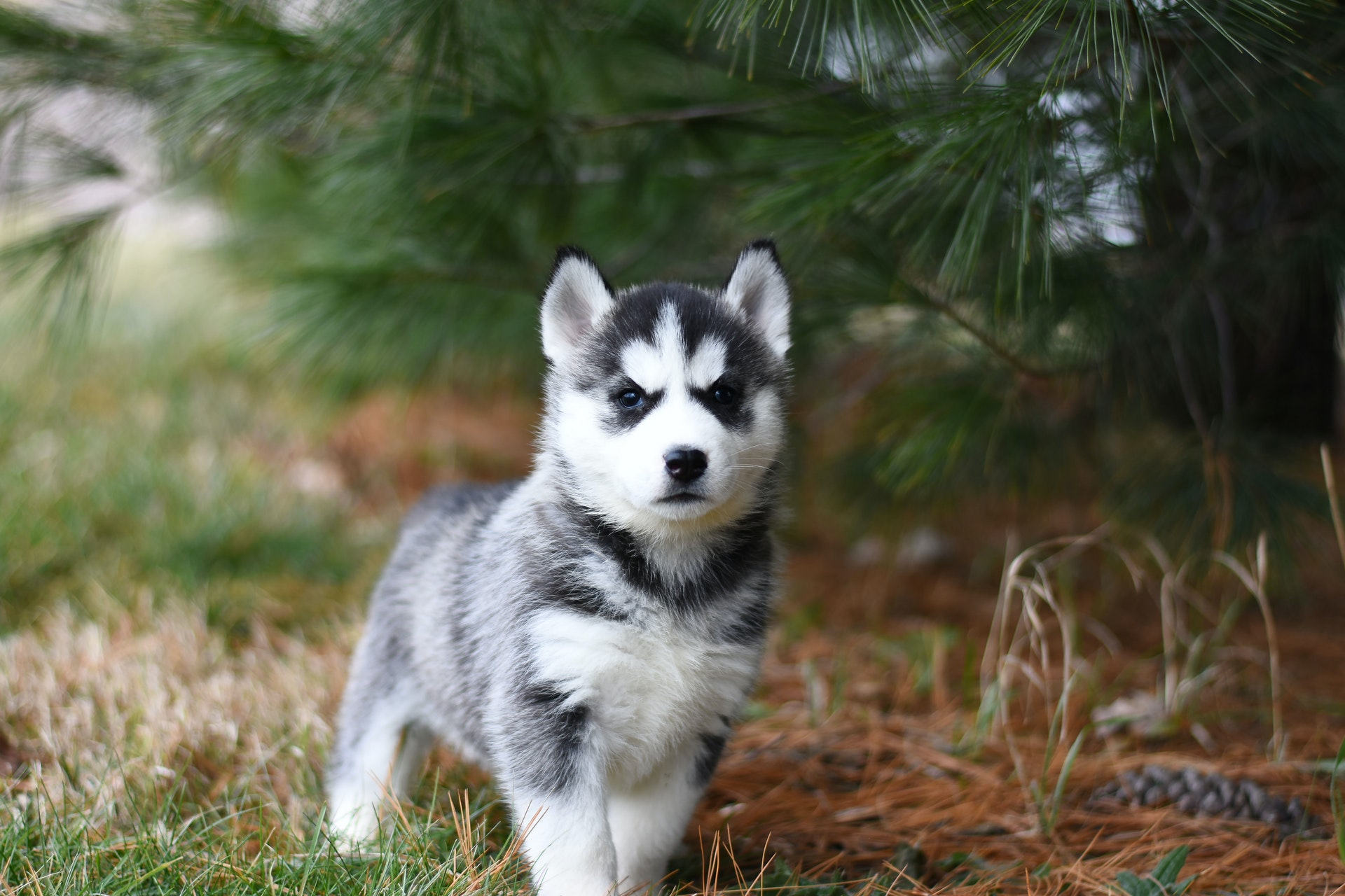 Are you a new pet owner? Learn these signs of a healthy puppy!