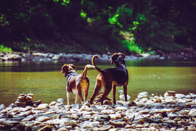7 Ways to Keep Your Dog Happy and Healthy
