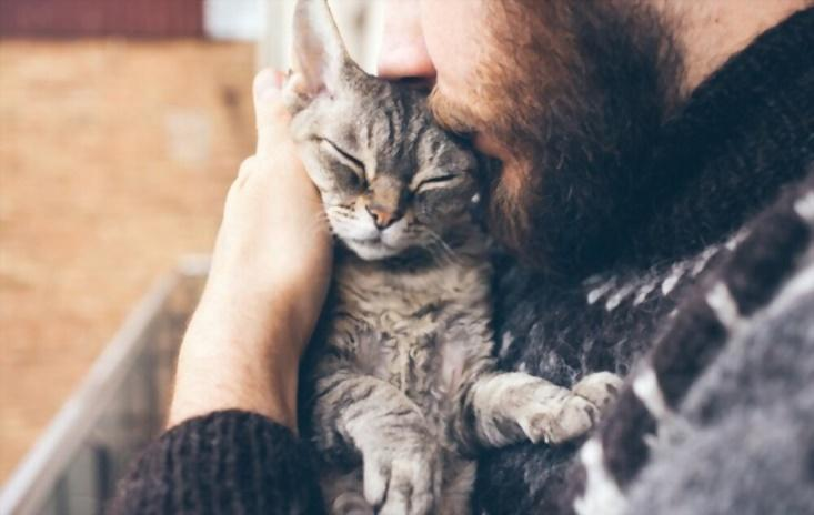 How Cats Help You Recover From Addiction