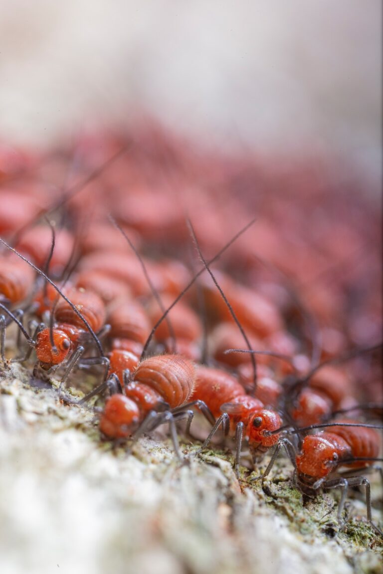 Most Common Signs That You Have Termites In Your WallsMost Common Signs That You Have Termites In Your Walls