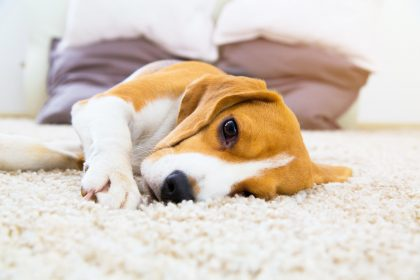 3 Things You Should Know Before Buying a Dog
