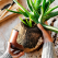 Favorite Online Resources for Houseplants