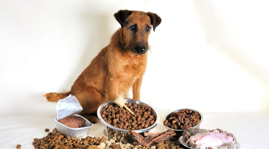 How to Choose the Right Dog Food for Your Pooch
