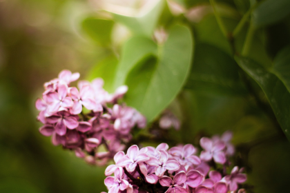 Why Your Garden Might Be Falling Ill