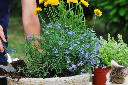 You Don't Need A Lot Of Soil To Make A Gorgeous Garden