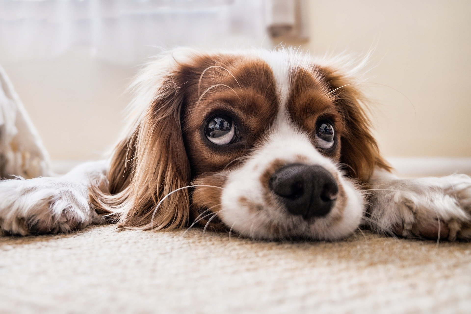 Essential Checklist For New Dog Owners